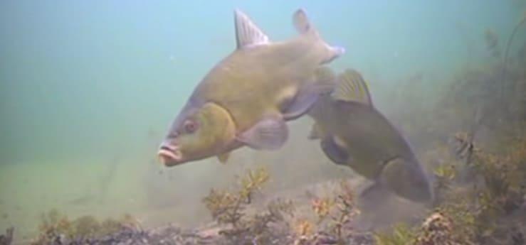 рыбалка на линя од водой