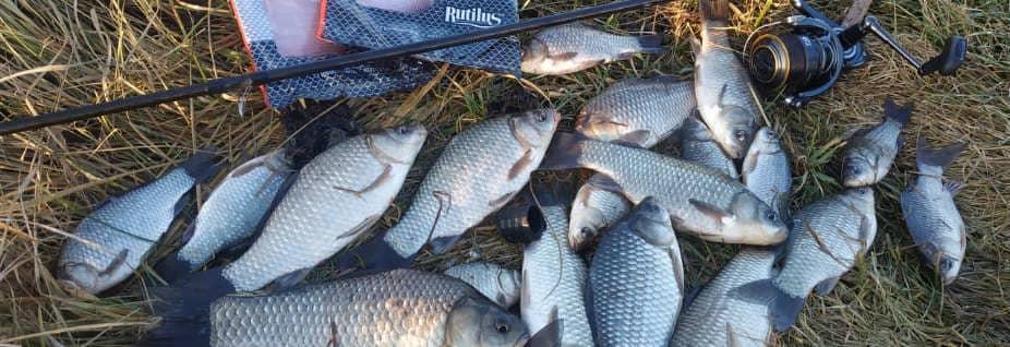 летняя рыбалка на карася прикормкой