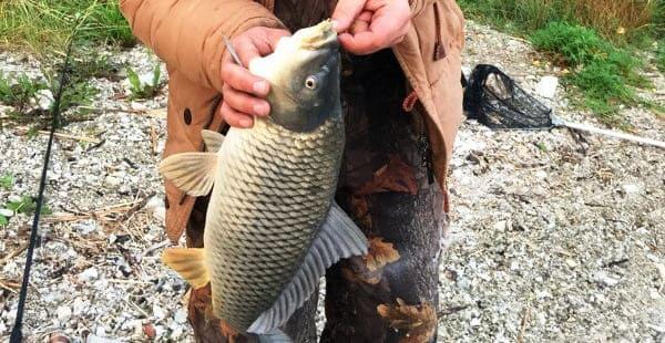 Ловля карпа весной особенная рыбалка
