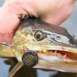 Рыбалка на щуку весной на спиннинг