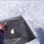 Ловля раков зимой на раколовку. Советы
