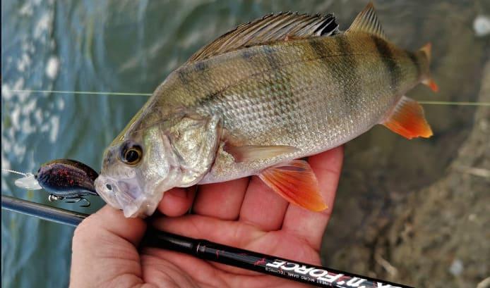 Рыбалка на окуня: когда, как и на что ловить