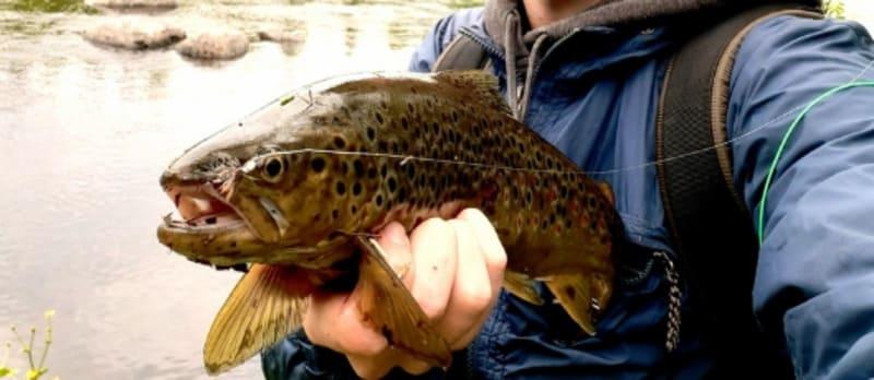 Ловля нахлыстом: что за рыбалка такая