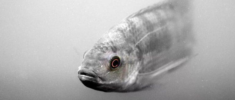 Какая рыба самая умная по мнению учёных