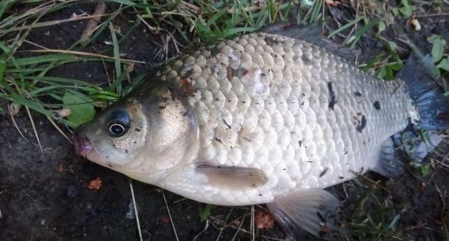 Какая рыба самая умная