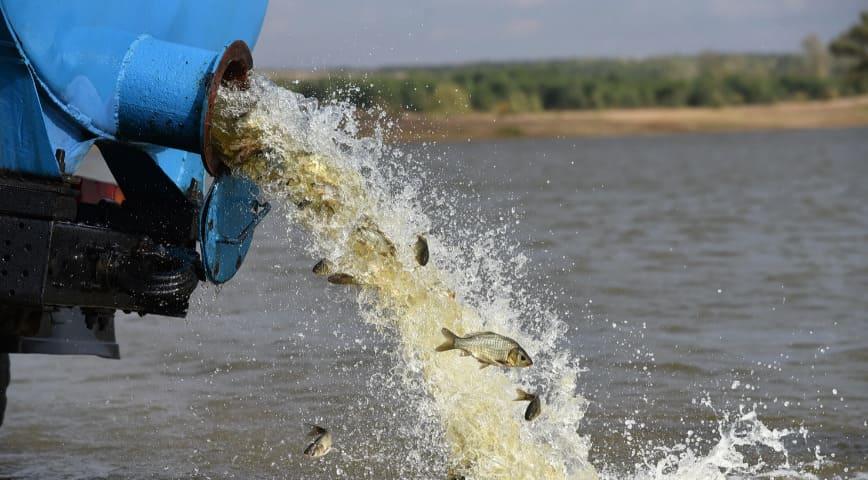 Сколько стоит зарыбить пруд для рыбалки