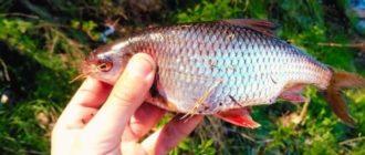 ловля рыбы в конце лета