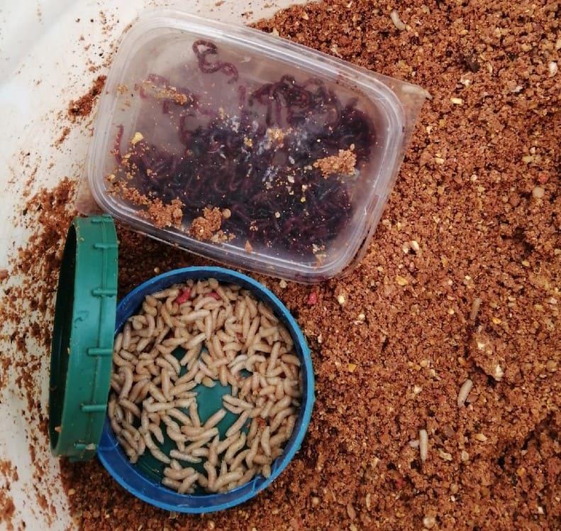 Уловистая связка наживка + прикормка осенью на мирную рыбу